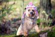 Sadie and her hat.jpg