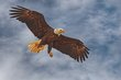 eagle-in-the-sky.jpg
