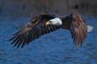 Eagle on Blue.jpg