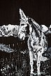 Sargent_Laurie__Donkey Series-2.jpg