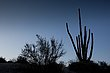Desert Silhouette.jpg