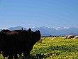 Farmlands in Ribeck Kasteel South Africa.jpg