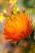 Orange beauty West Coast South Africa.jpg