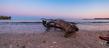 Arkles Bay DSCF9871(1).jpg