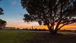 Orewa Beach Front  DSCF8728(1).jpg