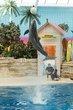 20140531 Brookfield Zoo-108.jpg