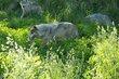 20140531 Brookfield Zoo-376.jpg
