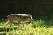 20140531 Brookfield Zoo-403.jpg