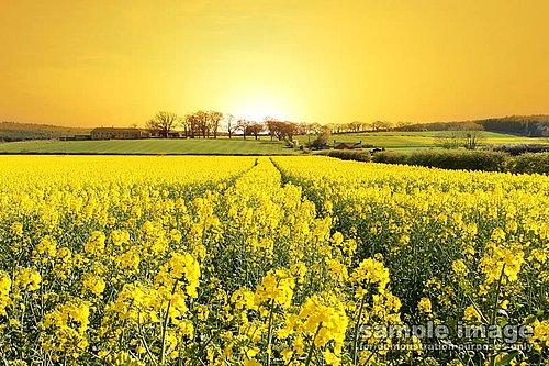 nature-sun-sp-004.jpg