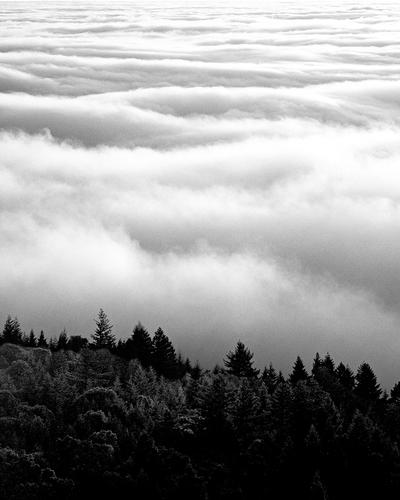 Coast -- Mount Tam Fog.jpg