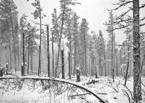 Black Hills Storm - 1988.jpg