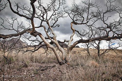 Burnt tree - New Mexico - 2015.jpg