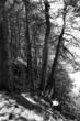 A Walk On The Bluff - bw.jpg