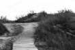 Path To Wonderfl bw_(1).jpg