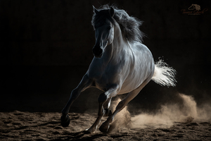 Andalusian Horse in dramatic light