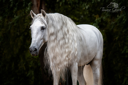 Andalusian-in-the-Woods-Photo-EPW_0156(1).jpg