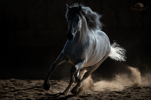 Andalusian in Shadow