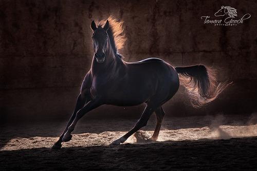 Hank-Morgan-Horse-Photo-EPW_2408.jpg
