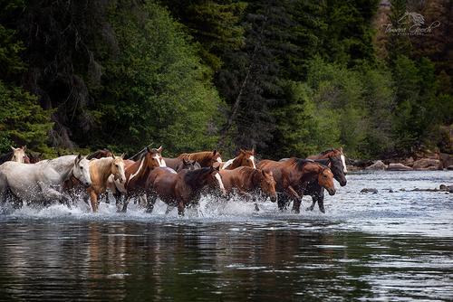 Horses-Crossing-A-River-Photo-KBZ_4923.jpg