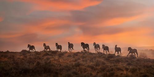Mustang-Moments-Photo_DSC0658.jpg