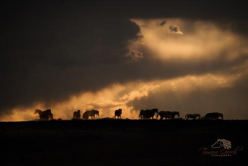 Passing-Thunderstorm-Mustangs-MPH_1081.jpg