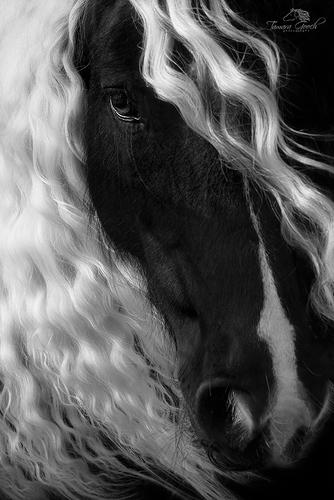 Sophie-Black-and-White-Photo-WAHS_7500.jpg