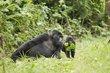 Bwindi Forest Uganda 1.jpg