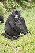 Bwindi Forest Uganda 3.jpg