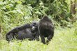 Bwindi Forest Uganda.jpg