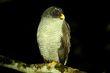 Black and White Owl 1.jpg