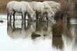White Horses 1.jpg