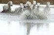 White Horses 2.jpg