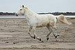 White Horses 4.jpg