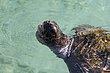 500lb sea turtle.jpg