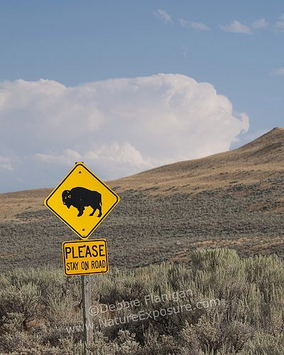 Buffalo Crossing Sign - SIG-0014.jpg