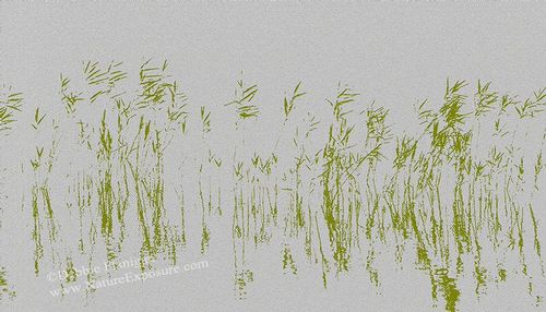 Abstract Reeds - ABC-0022 - Odd Size - Canvas Only - Contact for price.jpg