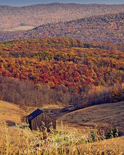 Barns - Fall Foliage Valley  - BAR-0023.jpg