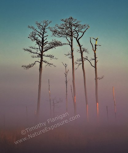 Blackwater Foggy Sunrise - SRS-0012.jpg