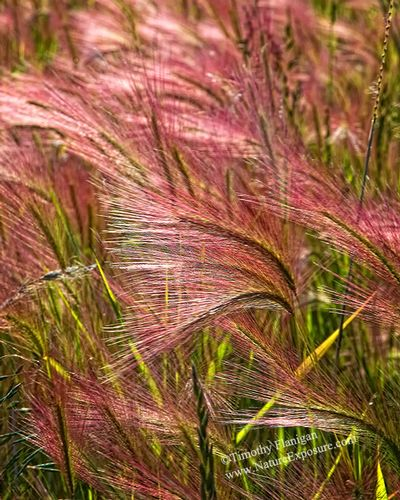 Blowing Grasses - FLO-0031.jpg