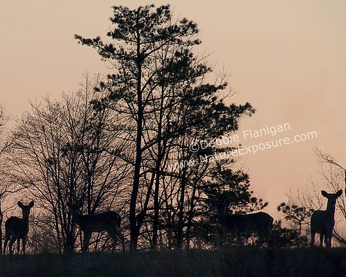 Whitetail Doe - Deer Silhouettes on a Hill - WDOF-0015.jpg
