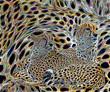 200 Cheetah(1).jpg