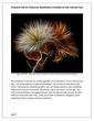 Art Dealer Review_Page_02(2).jpg