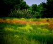 Tuscany Landscape - Claude Monet.jpg