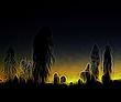 Uluru Night.jpg