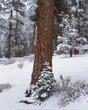 Baby Tree.jpg
