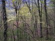 Dogwoods and Redbuds over Buffalo National Trail.jpg