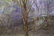 Steel Creek Woods.jpg