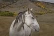 White Mustang Portrait.jpg