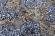 Blue Mussels and Barnacles.jpg