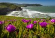 ALONG THE COAST  -  1224.jpg